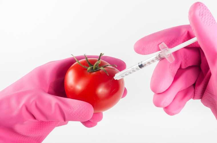 Prawdy i mity na temat GMO